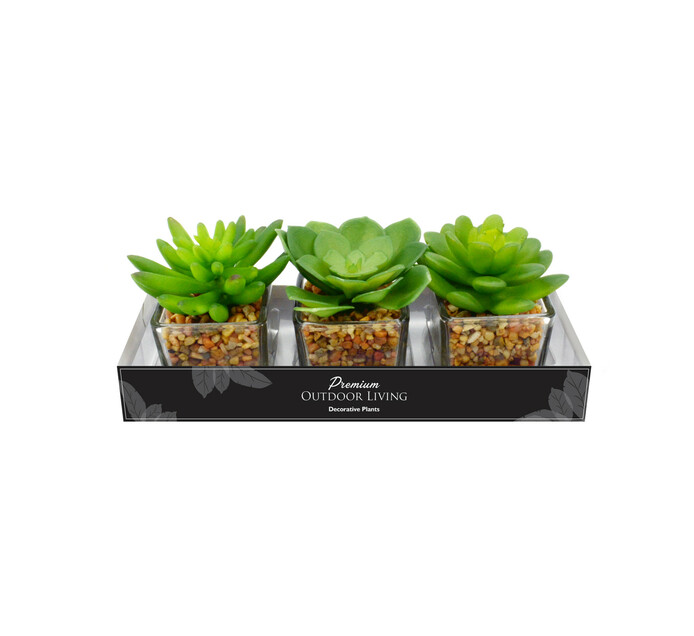 TERRACE LEISURE Patio Succulents In Glass Pot