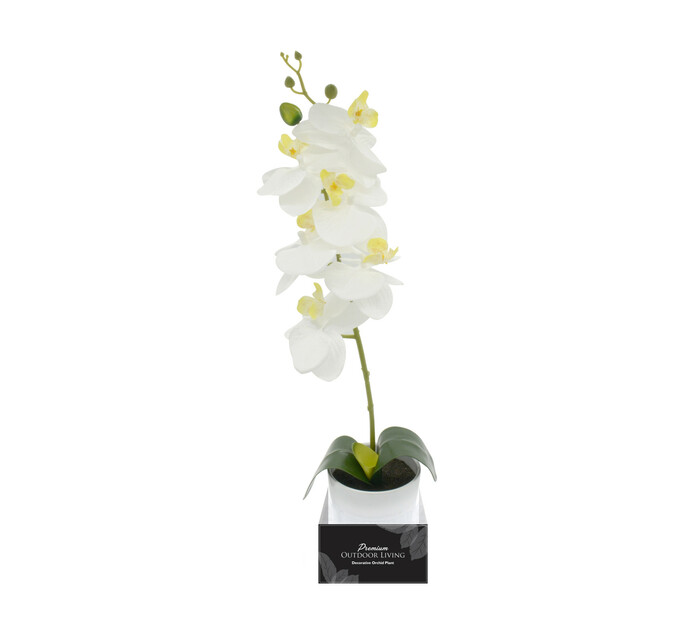 TERRACE LEISURE Patio Orchid in Box