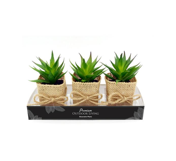 TERRACE LEISURE Patio Succulents In Square Hessian Pots