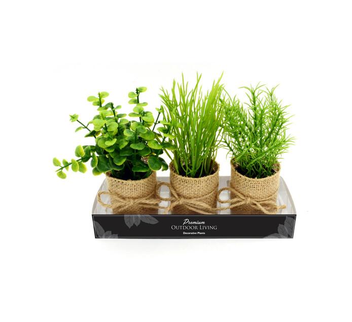 TERRACE LEISURE Patio Succulents In Paper Pots