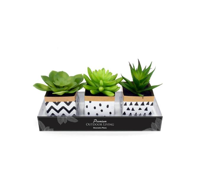 TERRACE LEISURE Patio Succulents In PVC Pot