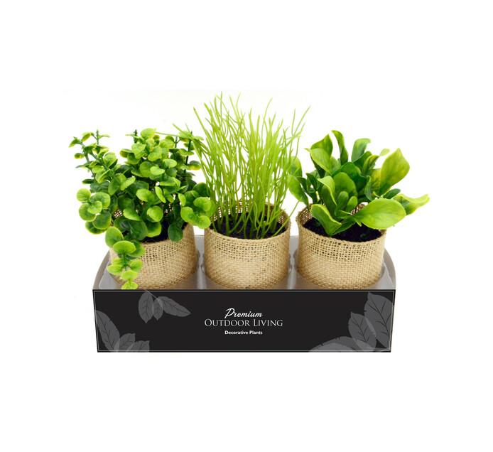 TERRACE LEISURE Patio Succulents In Hessian Pot